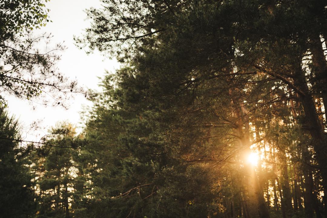 sesja ślubna las mazury